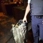 Taksim'de şüpheli paket imha edildi