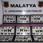 Malatya'da 336 kelebeğe 41 bin TL idarı para cezası