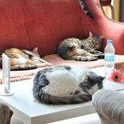 Eskişehir'de kedili kafe destek bekliyor
