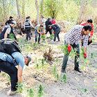 Hevsel Bahçeleri'ne uyuşturucu baskını yapıldı