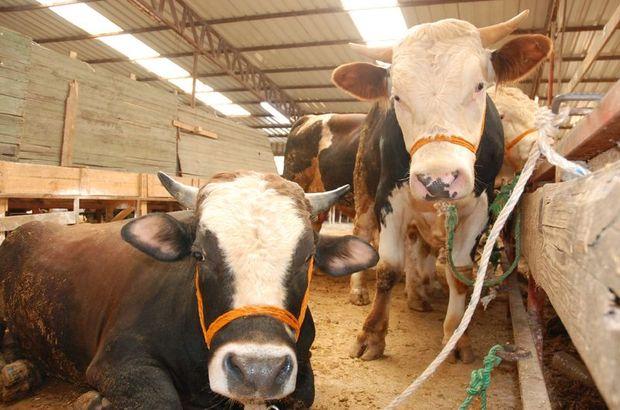 Hayvan pazarlarında hareketlilik başladı