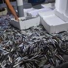 Denizlerde yeni av sezonu başladı