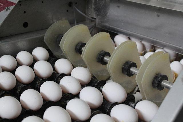 Yumurta deyip geçmeyin! İşte yumurta hakkında bilmeniz gerekenler!