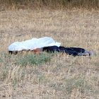 Sivas'ta koyun otlatma kavgasında iki kardeş öldürüldü