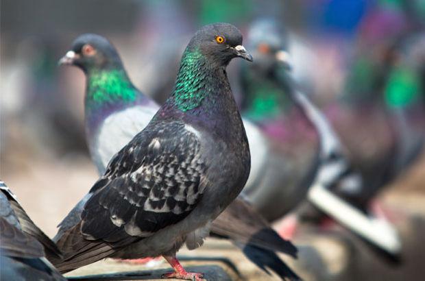 'Kuş beyinli' lafı tarihe karışabilir!