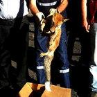 Bursa'da bir tilki 73 metre yükseklikte mahsur kaldı