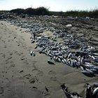 CHP'li vekil, toplu balık ölümlerinin araştırılmasını istendi