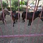FETÖ'nün atlarına el konuldu!