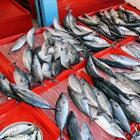 Balık fiyatları artmaya başladı