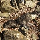 Yavru foku severken öldürdüler!