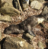 Biberonla beslemeye çalışan köylüler, sevmek ve yardım etmek isterken istemeden fokun ölümüne neden oldu