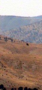 Şırnak'ta 14 bölge özel güvenlik bölgesi ilan edildi