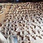 Üsküdar'da yapılan kazıda yüzlerce bulundu