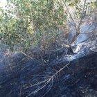 Elazığ'da orman yangını