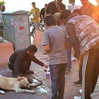 Balıkesir'de zehirlenen köpeği bir hayvansever böyle kurtardı