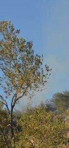 Balıkesir Ayvalık'ta orman yangın