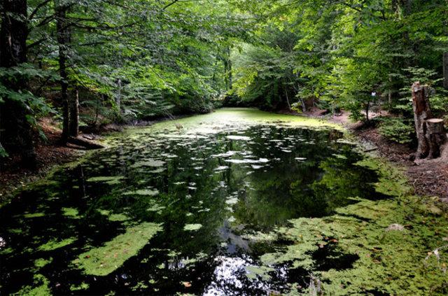 Milli parklar uluslararası alanda en iyi dereceyi aldı