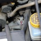 Sivas'ta inatçı kedi, pes ettirdi