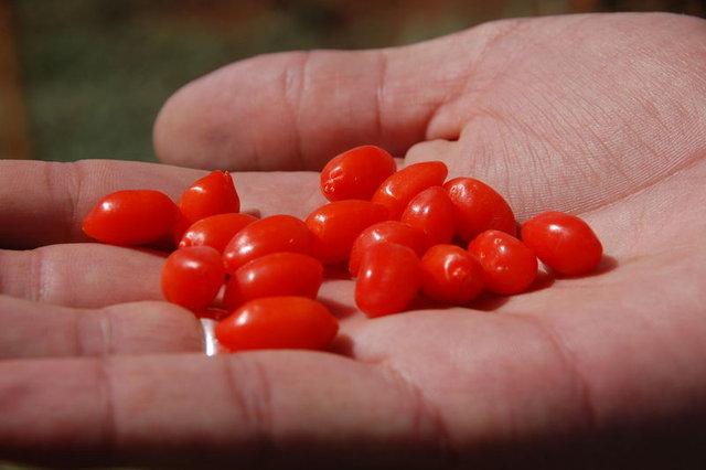 Goji berry meyvesinin faydaları!