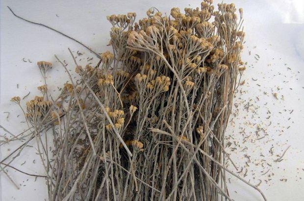 Osmanlı'nın bitkisel tedavi arşivi
