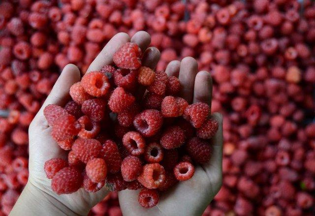 En sağlıklı besinler nelerdir?