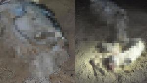 Kuşadası'nda sahilde çocuk cesedi bulundu