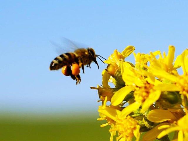 Kargodan çıkan 50 arı imha edildi