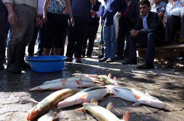 Balık mezatında zıplamayana para yok