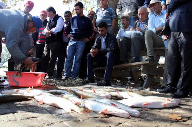 Balık mezatında zıplamayana para yok, Zıplayan balıkları yol ortasında açık artırmayla satıyorlar