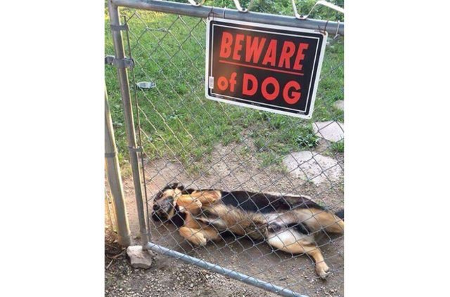 Dikkat köpek var!