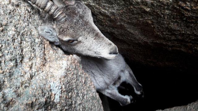 Ölmek üzereyken son anda kurtarılan hayvanlar