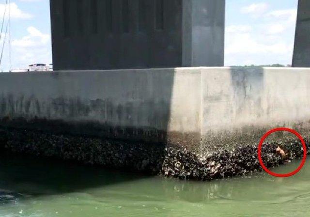 Suya düşen yavru kedi ölümden döndü