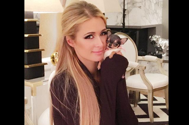 Paris Hilton yeni köpeğine servet harcadı