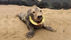 Bir anda suya atlayıp boğulmaktan kurtardı