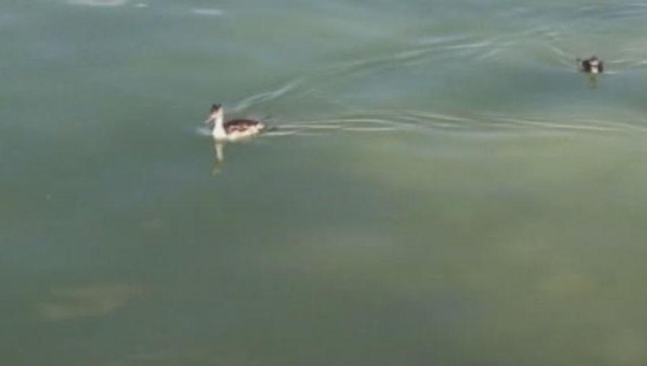 Burdur Gölü Su Kuşları
