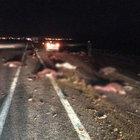 Otomobilin çarpması sonucu 35 koyun telef oldu