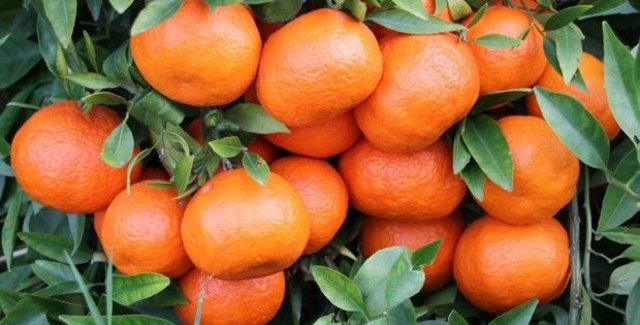 Sağlık deposu; sarı ve turuncu besinler