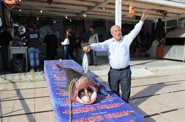 Kanser hastaları köpek balığı ile şifa bulacak