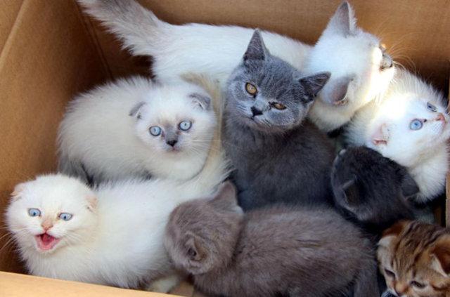 Yavru kediler gümrükten ihaleyle satılacaklar