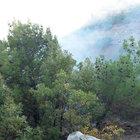 PKK'lı teröristler kaçmak için ormanı yaktı