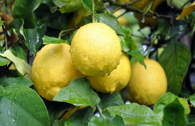 Limon dezenfektan olarak kullanılabilir mi?
