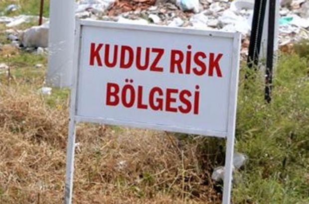 Bursa'da kuduz alarmı! O ilçe karantinaya alındı