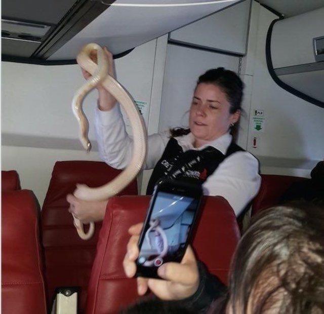 Hostes uçakta yılan yakaladı