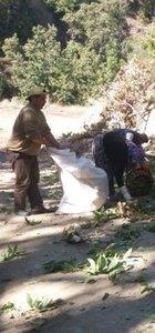 Ağaca tırmanacak işçiler aranıyor