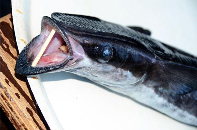 Bodrum'da vantuz balığı yakalandı