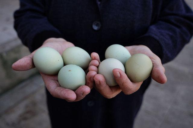 Beyaz yumurta ile kahverengi yumurta arasında ne fark var?