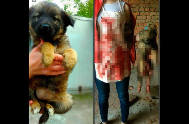 Sokak hayvanlarına işkence eden kızlar tutuklandı