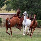 TSK'ye at, beygir ve katır alınacak!