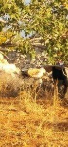 Kuyuya atılan bekçi dövülerek öldürülmüş