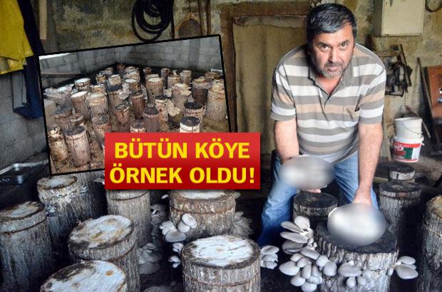 Bodrumunda yetiştirdiği mantarları internette satıyor